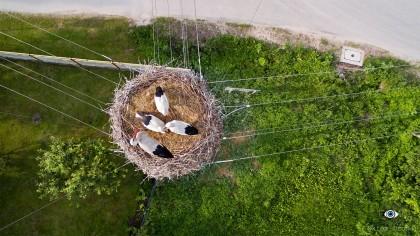Bocianie gniazdo na słupie elektrycznym